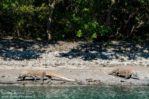 Photo plongée à Komodo : Dragons sur la plage de Torpedo